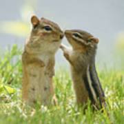 Chipmunks In Grasses Poster by Corinne Lamontagne