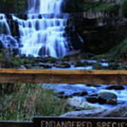 Chittenango Falls State Park Poster