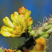 Cholla Flower Op41 Poster