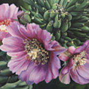 Cholla Flowers Poster