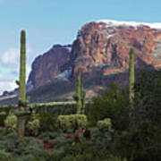 Cholla  Saguaro Superstition Mountain Poster