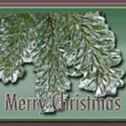Christmas Arborvitae In Ice Poster