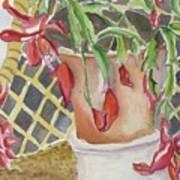 Christmas Cactus Poster