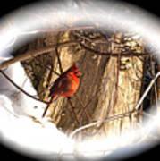 Christmas Cardinal Poster