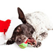 Christmas Dog Chewing On Tennis Ball Poster