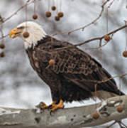Christmas Eagle Poster