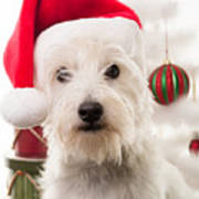 Christmas Elf Dog Poster