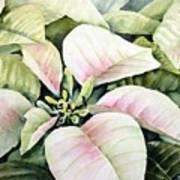 Christmas Poinsettias Poster by Bobbi Price