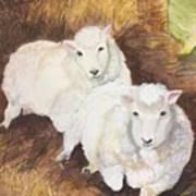 Christmas Sheep Poster