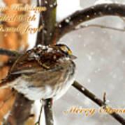 Christmas Sparrow - Christmas Card Poster