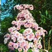 Chrysanths Poster