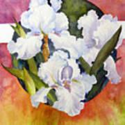 Circle Of Irises  Poster