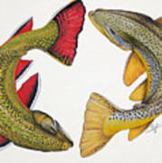 Circling Brook And Brown Trout Poster