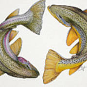 Circling Rainbow And Brown Trout Poster