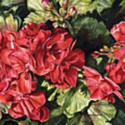 City Flowers Red Geranium Poster