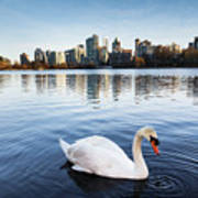 City Swan Poster