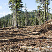 Clearcutting Poster