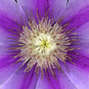 Clematis Poster by Christopher Gruver