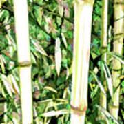 Close Up Big Fresh Bamboo Poster