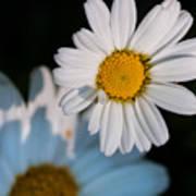 Close Up Daisy Poster