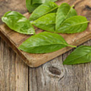 Close Up Fresh Basil Leafs On Rustic Serving Board  Poster