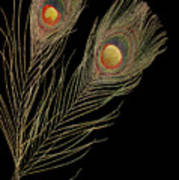 Close Up Of An Abstract Peacock Feather Poster