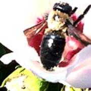 Close Up Of Bumble Bee On Flower Poster