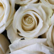 Close Up White Roses Poster