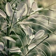 Close Up Wild Flower Poster
