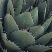 Close View Of An Agave Plant Poster