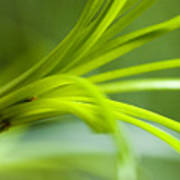 Close View Of Green Flower Poster