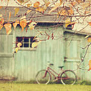 Closeup Of Leaves With Old Barn In Background Poster