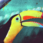 Closeup Portrait Of A Colorful And Exotic Toucan Bird Against Blue Background Nicaragua Poster