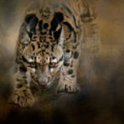 Clouded Leopard On The Hunt Poster