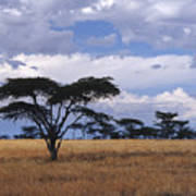 Clouds Over The Masai Mara Poster