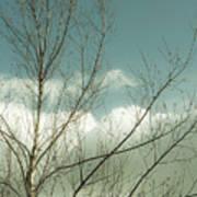 Cloudy Blue Sky Through Tree Top No 1 Poster