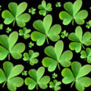 Clovers On Black Poster