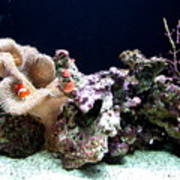 Clown Fish Reef Poster