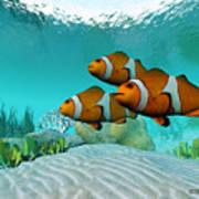 Clownfish Poster