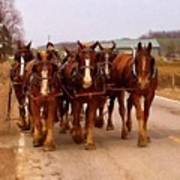 Clydesdale Amish Plow Team Poster