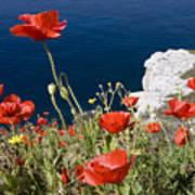Coastal Poppies Poster