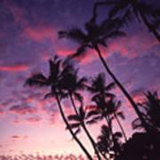 Coastline Palms Poster