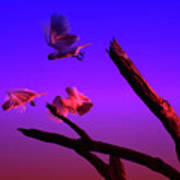 Cockatoos In The Twilight Poster