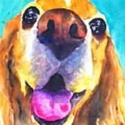 Cocker Spaniel Dog Smile Poster