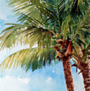 Coconut Palm Poster by Peter Sit