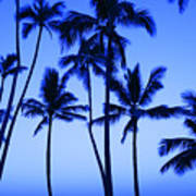 Coconut Palms At Dawn Poster