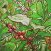 Coffee Cherries Poster