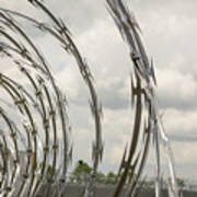 Coils Of Razor Wire On Fence Poster