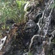 Coki Waterfall Poster