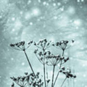 Cold Winter Poster